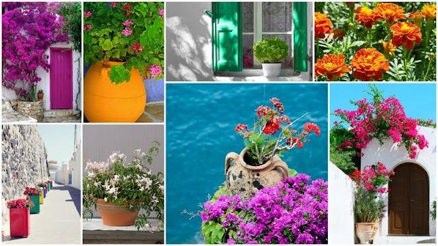 Τα 5 πιο τυπικά λουλούδια του ...Ελληνικού καλοκαιριού και τρόποι για να τα αξιοποιήσετε στον κήπο ή το μπαλκόνι σας