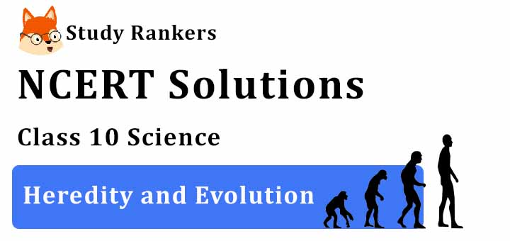 NCERT Solutions for Class 10 Science Chapter 9 Heredity and Evolution