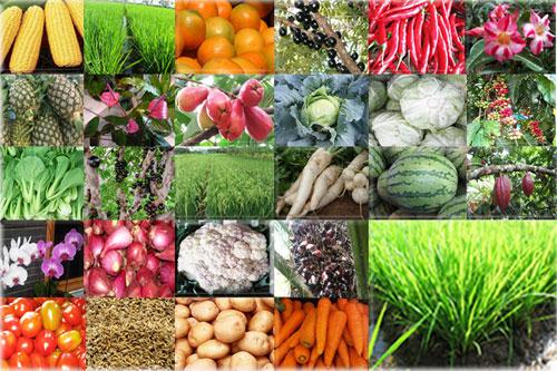 Produk Pertanian Yang Menguntungkan Produk Pertanian Dalam Arti