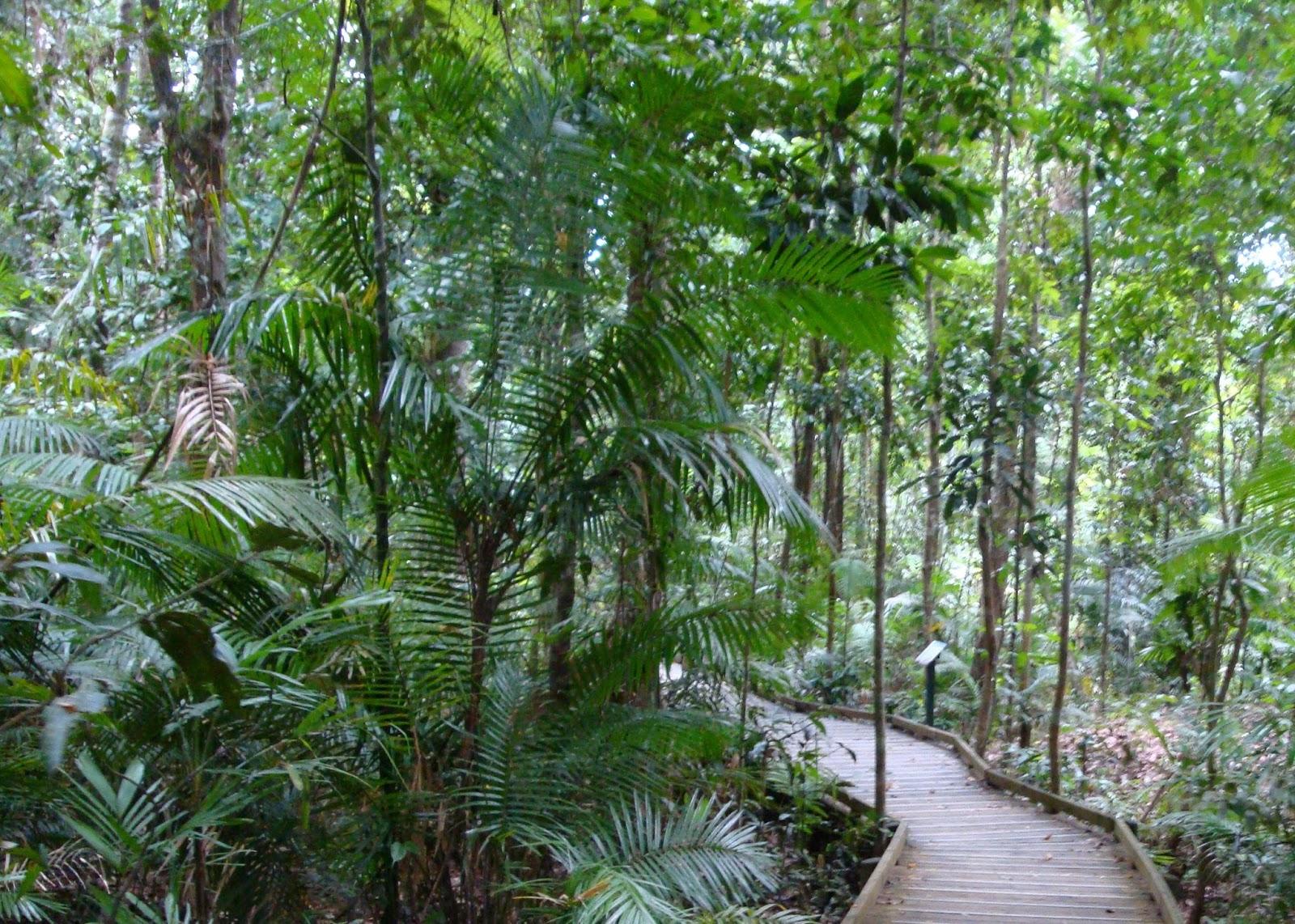 Pengertian Ciri Ciri Serta Fungsi Dan Manfaat Hutan Hujan Tropis