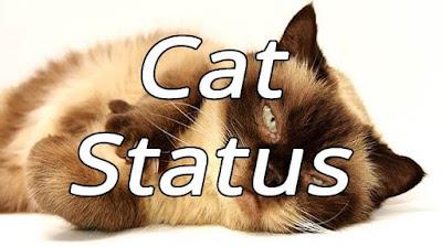 Cat Status