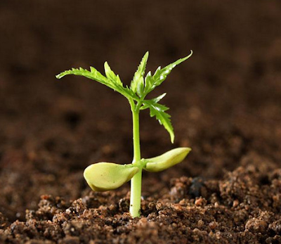 Faktor mempengaruhi Pertumbuhan dan Perkembangan Tumbuhan, Faktor Internal yang mempengaruhi Pertumbuhan dan Perkembangan Tumbuhan, Faktor Eksternal yang Mempengaruhi Pertumbuhan dan Perkembangan Tumbuhan, Faktor Hormon Auksin, Faktor Hormon Giberelin, Faktor Hormon Sitokinin, Faktor Asam Abisat, Faktor Gas Etilien, Faktor  Cahaya, Faktor Temperatur/Suhu, Faktor Air, Faktor Makanan/Nutrisi, Faktor Kelembapan, Faktor Ph Tanah.