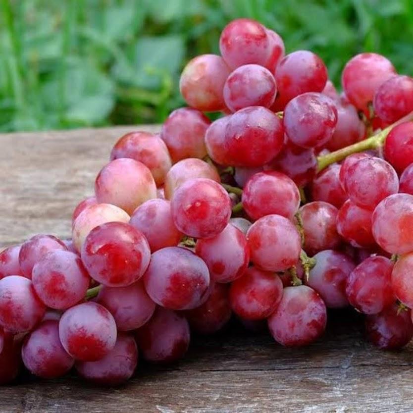 Bibit Anggur Merah Caroline Jawa Barat