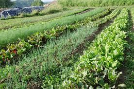 जैविक खेती और किसान का भविष्य