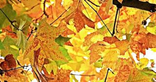 foglie secche d'autunno