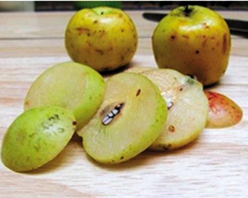 Hướng dẫn chi tiết cách sắc táo mèo khô