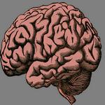 brain in spanish