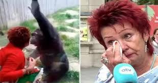 'Berselingkuh' dengan Simpanse, Seorang Wanita Dilarang Kunjungi Kebun Binatang