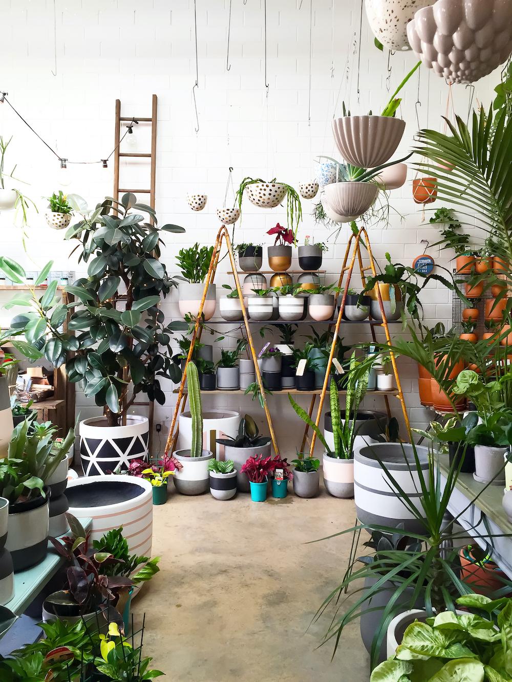 Plantas de interior en casa, decorar la casa con plantas