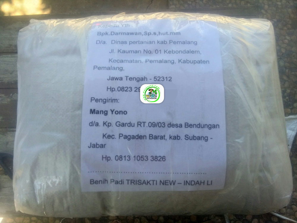 Benih Pesanan Darmawan Pemalang, Jateng. (Setelah packing)