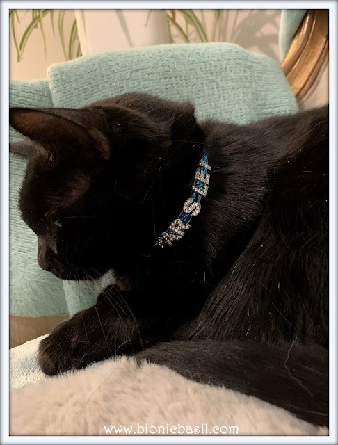 Who's Wearing Parsley's New Collar  ©BionicBasil® The Pet Parade 388 b