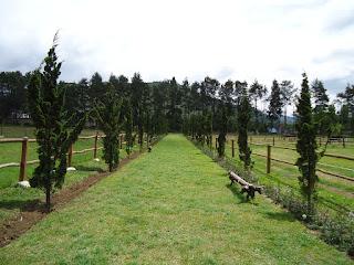 De Ranch - Lembang