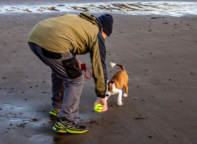 Photo of Phil and Ruby playing ball on the beach