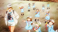 Megakaryocyte and the Platelets