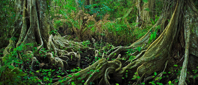 Amazonian Indigenous territories are crucial for conservation