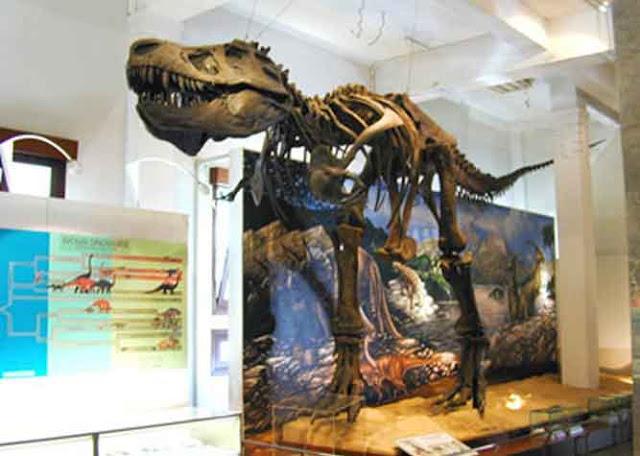 Fosil Terkenal Museum Geologi