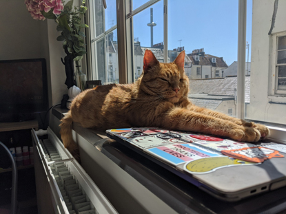Ginger cat stretched out on a windowsill