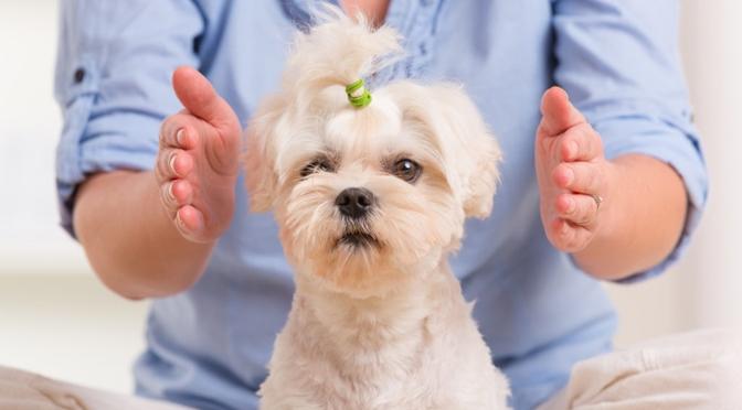 Resultado de imagem para decreto cura animais