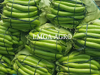 bisnis, peluang usaha, jual murah, hasil pertanian, toko pertanian, online, lmga agro