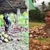 Isang 69-Anyos na Lolo, Matiyagang Nagkokopra Kahit na Siya ay Walang Paningin!