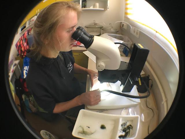 Henkilö katsoo kasvia mikroskoopilla