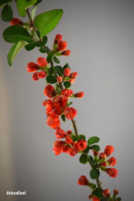 Czerwony krzew