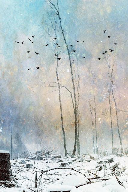 art, artwork, textureblend, Dorothe Domke, winter 2020, photoart, Fotokunst