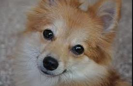 euthanizing a dog euthanasia for dogs