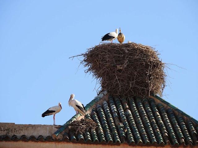 nido delle cicogne palazzo el badi marrakech
