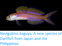 http://sciencythoughts.blogspot.co.uk/2017/11/navigobius-kaguya-new-species-of.html