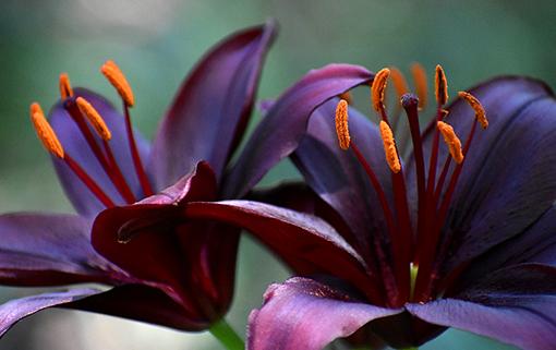 Atlanta Botanical Garden - Gainesville   Photo: Travis Swann Taylor