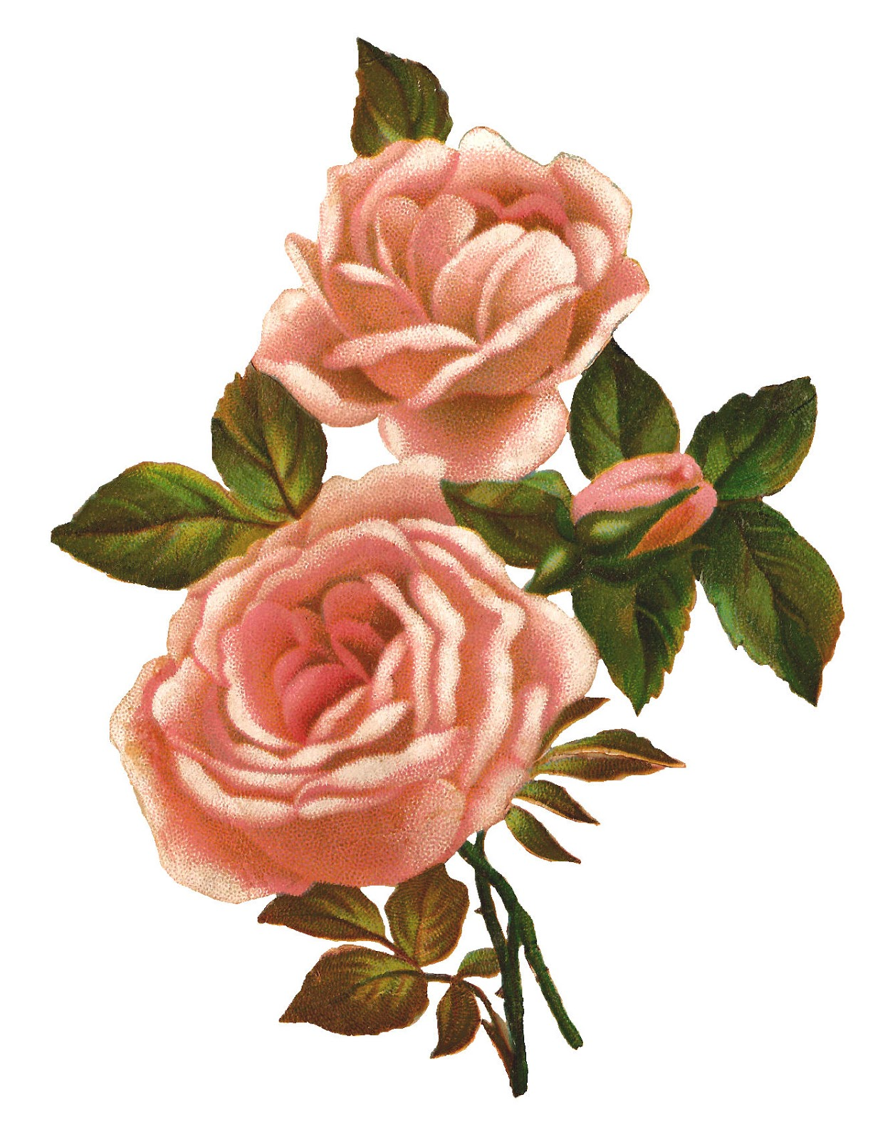 Antique Images Pink Rose Stock Image Vintage Shabby Flower Clip Art