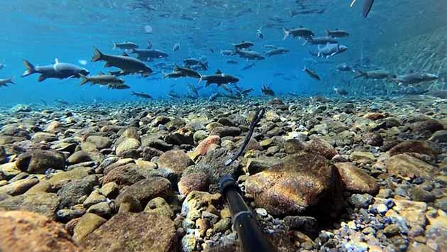 Objek Wisata Cibulan Kuningan Tempatnya Wisata Renang Dengan Ikan
