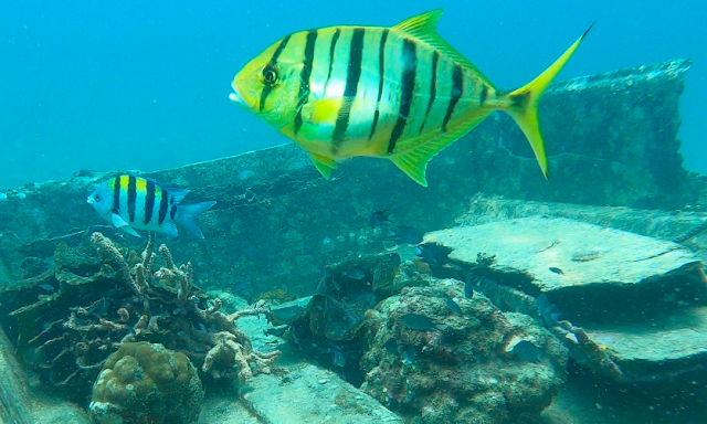 Diving at Tanjung Putus Island, Lampung, Indonesia