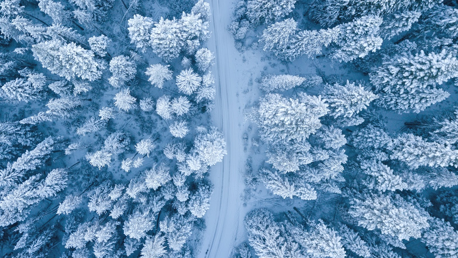 aerial-photography-of-snow-covered-trees-nature-pictures