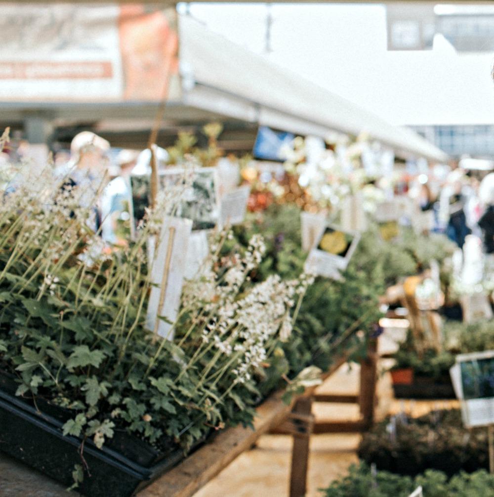 garden store plants