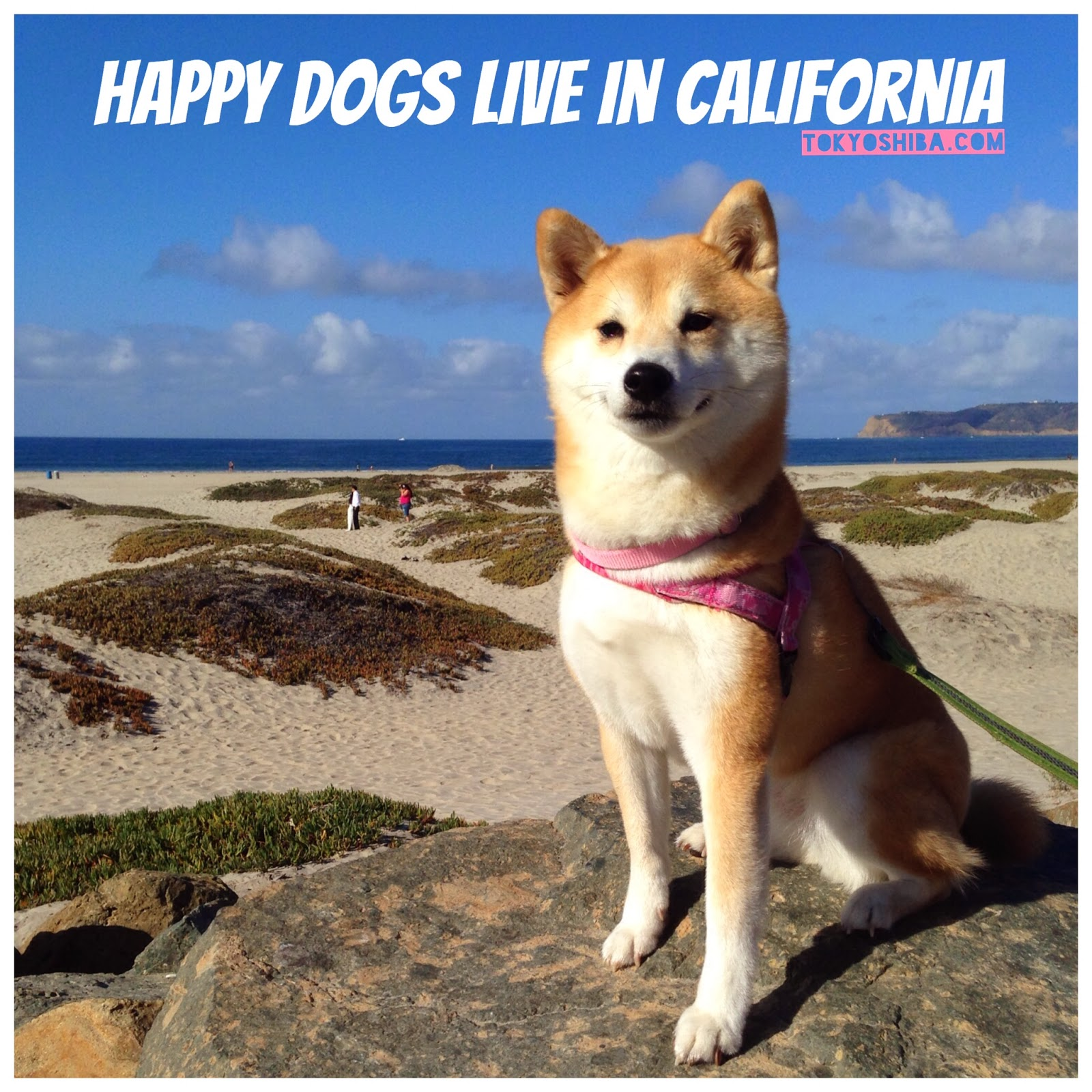 Happy Travels For Dogs Reviews