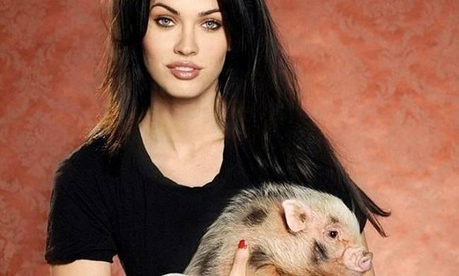 Megan Fox and her mini pig