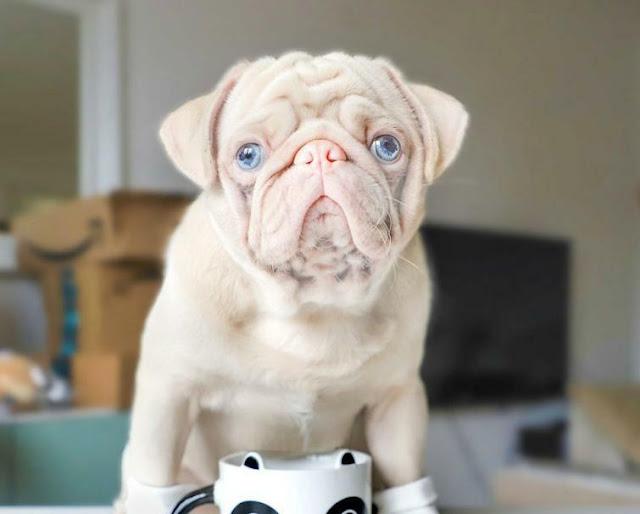 Бело-розовый пес стал звездой интернета