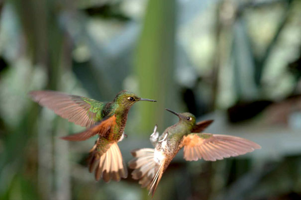 15+ Pics That Show Photography Is The Biggest Lie Ever - Capturing The Hummingbirds With 3d Camera