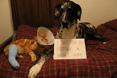 Funny Dog Humor : sorry for breaking your arm