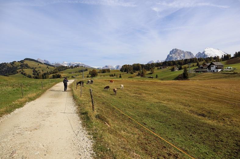 Trekking Compaccio Saltria sull'Alpe di Siusi