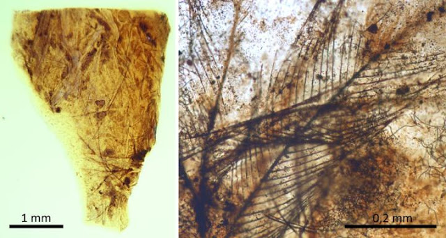 Palaeontologists describe a unique preservation process analyzing remains found in amber