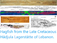 https://sciencythoughts.blogspot.com/2019/04/hagfish-from-late-cretaceous-hadjula.html
