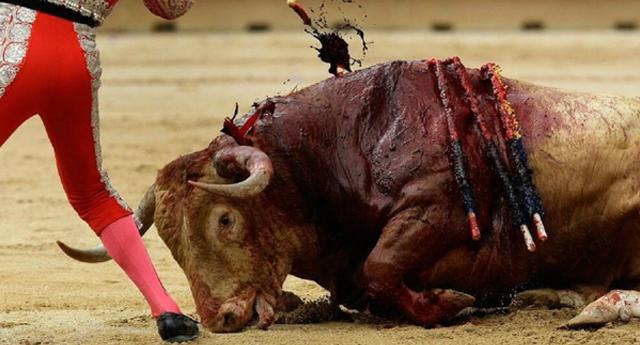 Cuando un toro mata a un torero se sacrifica a toda su familia