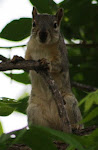 Photograph of baby squirrel by Darla Sue Dollman