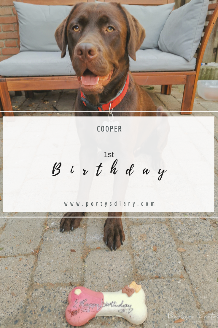 Cooper is 1 year old! Our chocolate Labrador Retriever had his first birthday party.