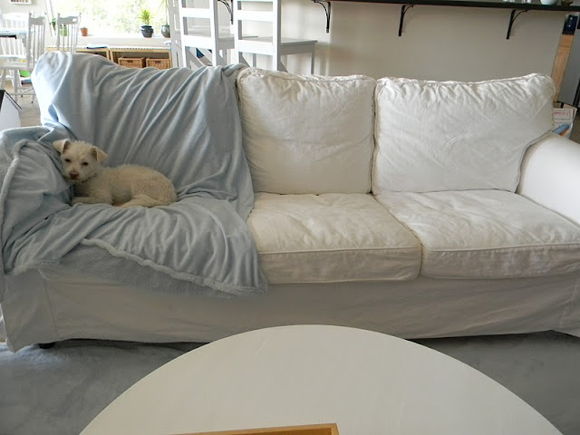 how to clean mud off sofa