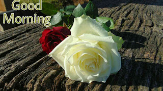 Beautiful good morning images , pics and photos of red rose and white rose flowers