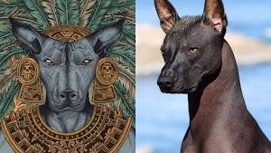 El perro Xoloitzcuintle, el guía de la muerte.